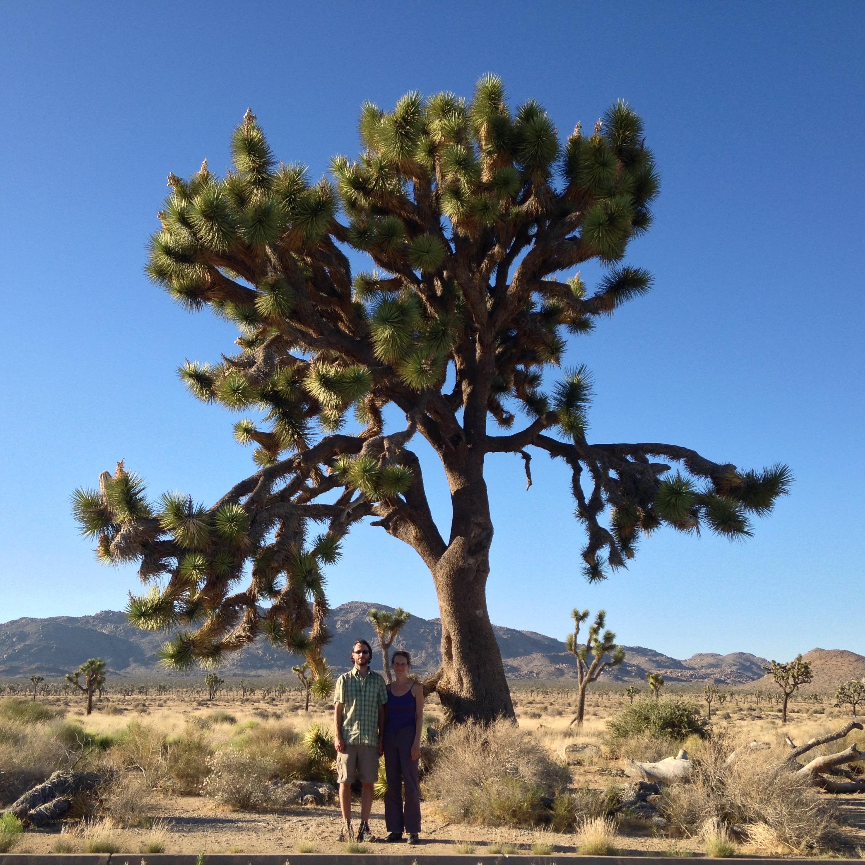 Folias in Joshua Tree